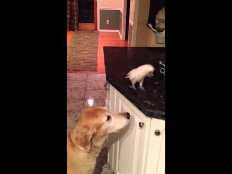 video que muestra a un pajaro dandole de comer a un perro