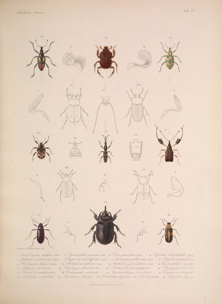 natural history illustration from  Cuba 1838-1857 l
