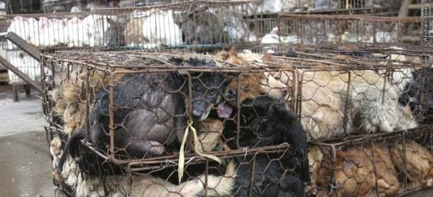 Perros con destino a los restaurantes vietnamitas