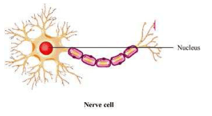 CBSE NCERT Class VIII (8th)   Science   Biology, Structure and Functions,  CBSE NCERT Solved Question Answer, CBSE NCERT Solution.