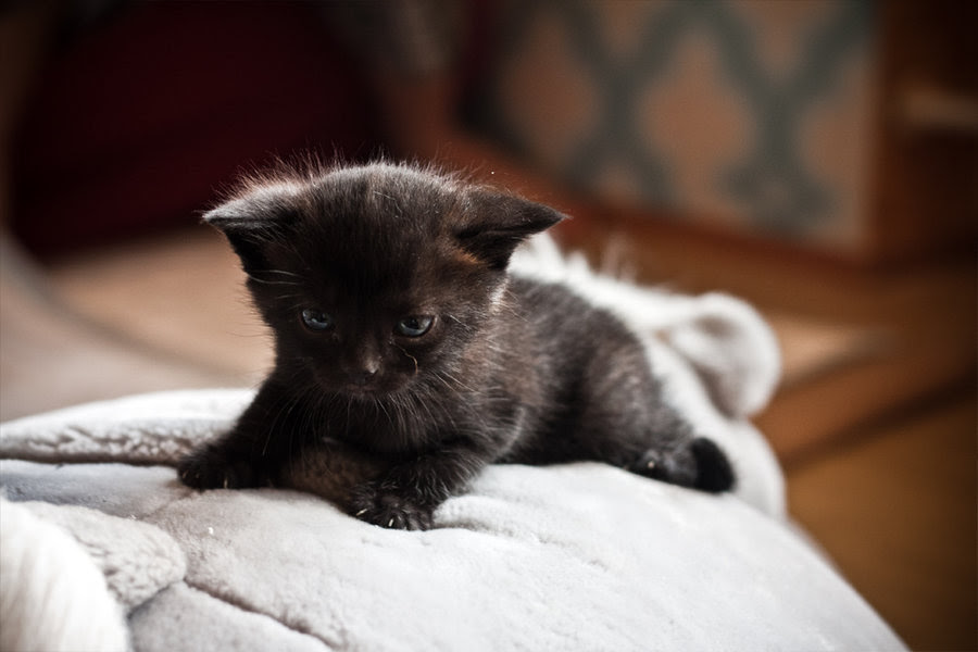50 Beautiful And Cute Cat Pictures