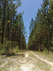 Beerburrum State Forest