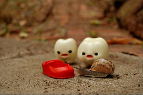 """""""Gift for snail."""""""
