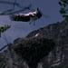 Cigüeña común (Ciconia ciconia)