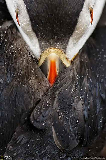 2016-national-geographic-nature-photographer-of-the-year-winners-12-584fb79c0dcd4__880