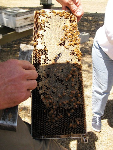 Tour of Bill's Bee Ranch