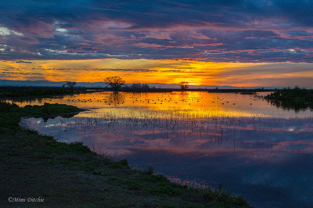 Sunrise at               Merced National Wildlife Refuge in California