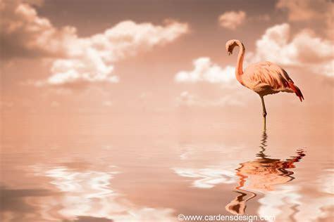 flamingo wallpaper  wallpaper home