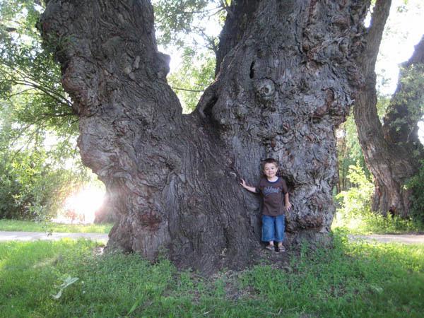 Nick & the big tree - 3