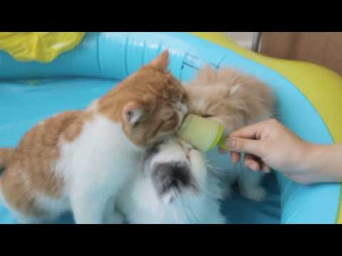Kittens Puppies Cats Enjoy Popsicles - Video