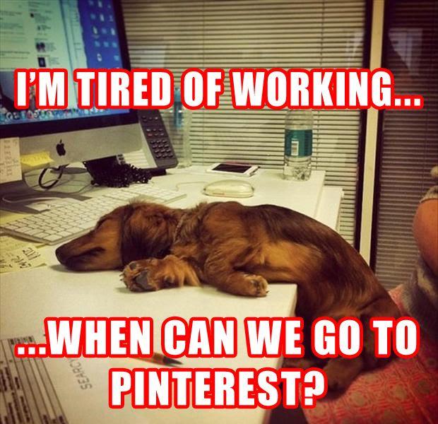 dachshund pinterest, dachshund office, dachshund office, doxie, dachsund