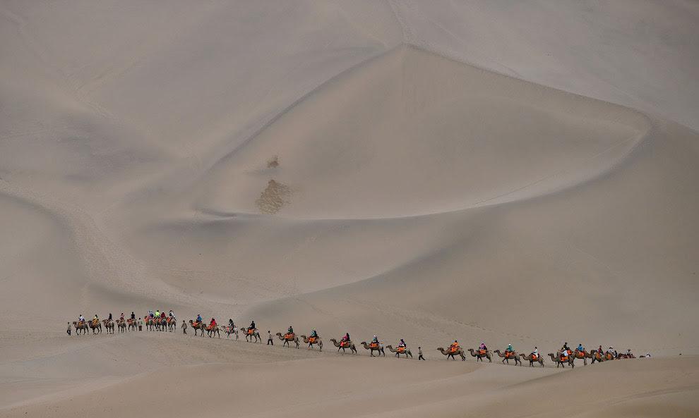 Караван верблюдів у пустелі в Дуньхуане, Китай