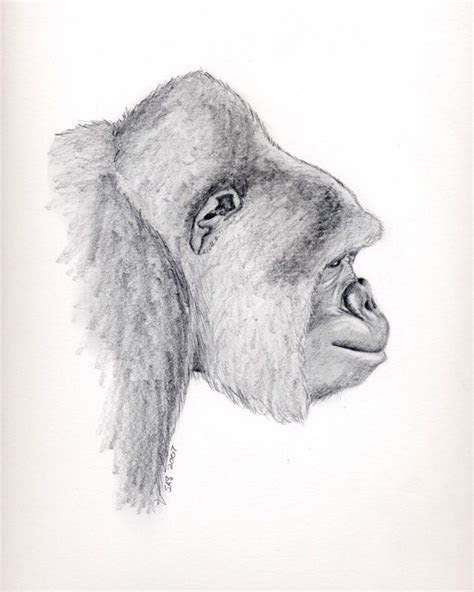 images  pencil drawings  pinterest