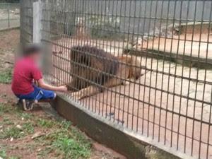 Na imagem, criança brinca com um leão antes do acidente em outra jaula, com tigres (Foto: Edmar Vieira/arquivo pessoal)