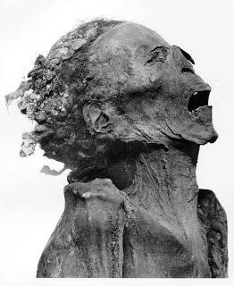 head of unknown mane-1