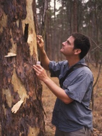 A vertical image of Dr Chris Burwell outside looking for insects on a tree