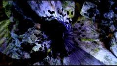 Gaia & Genesis (2009) 002