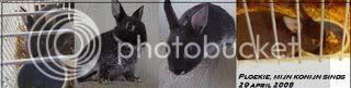 Ploekie.jpg sig mijn konijntje Ploekie picture by charlesfan