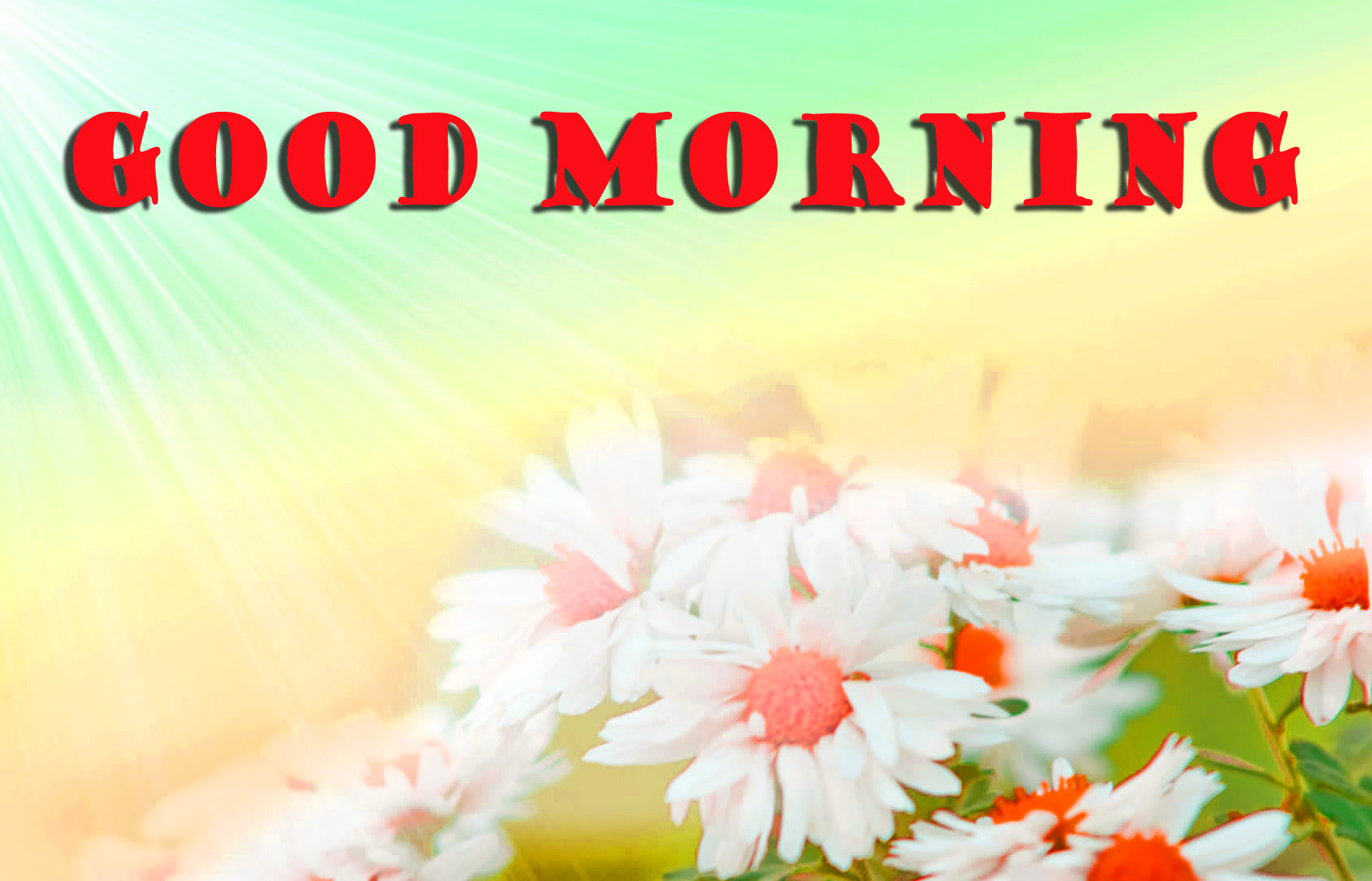 Good Morning Images With Quotes In Hindi With Flowers Archidev