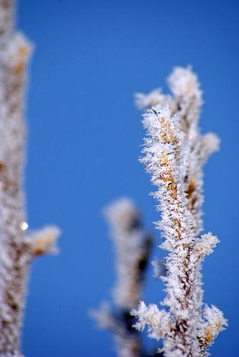 Frozen-fog-4_edited-1
