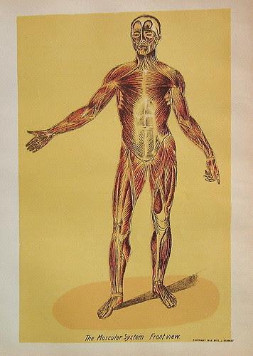 Antique Medical Book Prints by ninainflorida