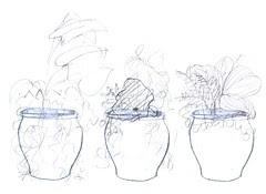 Threesome: ideas for container plantings