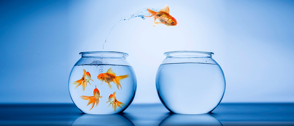 serial-entrepreneur-goldfish.jpg