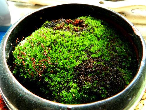 Indoor moss