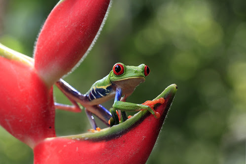 Ribbit In The Rainforest by Megan Lorenz