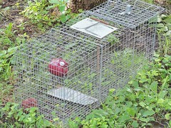Licensed to trap gophers