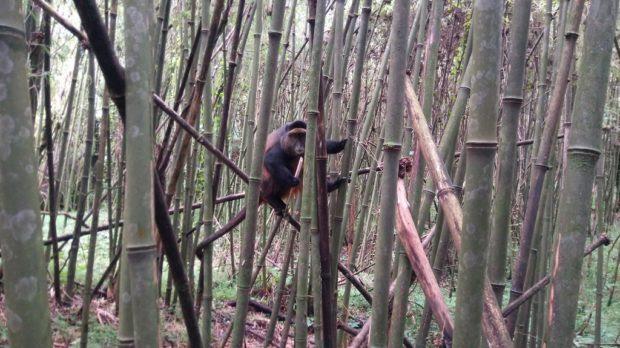 Exploring Mgahinga Gorilla National Park