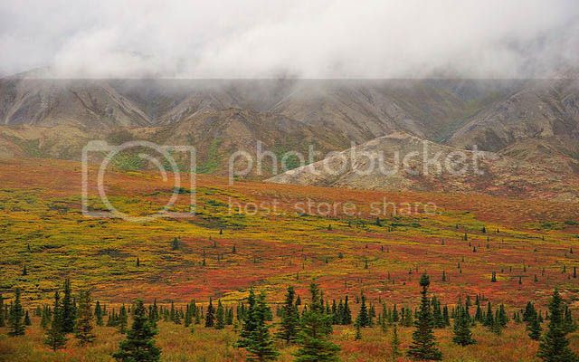 Autumn landscape of Denali