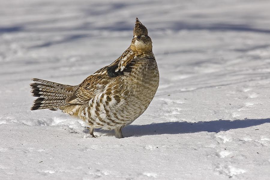 when shooting wildlife..... - PentaxForums.com