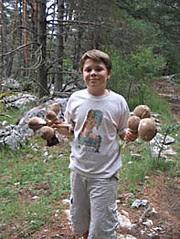 paul et les champignons