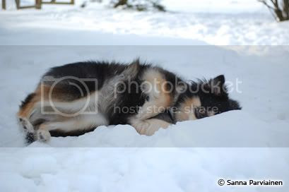 Lumi ja talvi on ihanaa..
