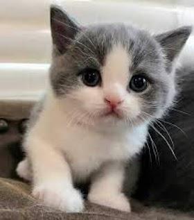 Kucing Lucu Jelek