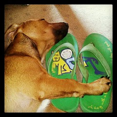 Booth loves old flip flops! #foster #adoptdontshop #dogs #puppy #flipflops