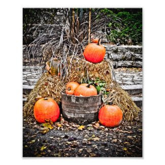 Pumpkins in Quebec Photo Art