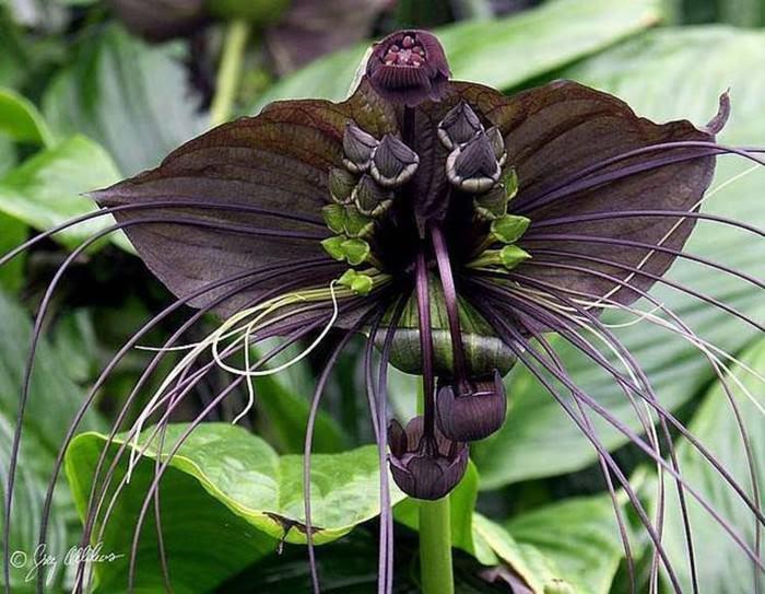 Incredible Flowers