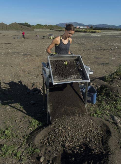Synne H. Rostad opera un colador para filtrar pequeños huesos y objetos en la tierra.