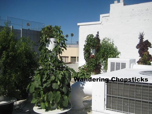 Rooftop Garden - Playa Restaurant - Los Angeles 16