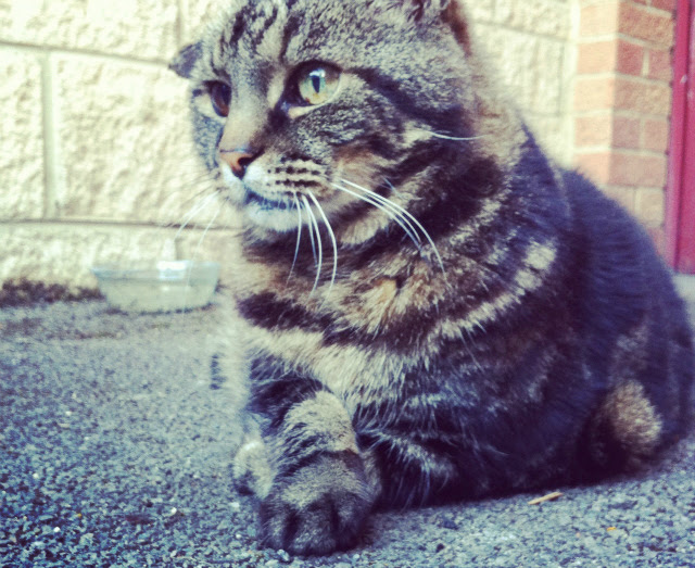 10 cat blogger uk vivatramp animals lifestyle blog