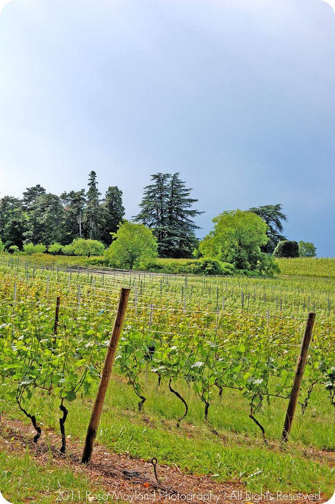 Border Vineyard Stormy 1 1 bis