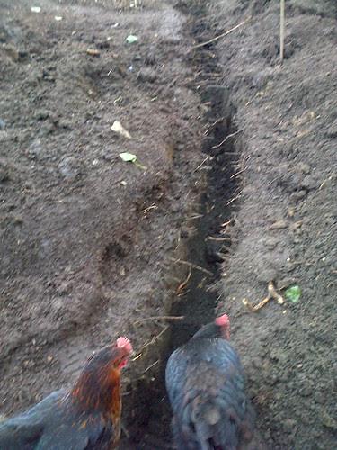 allotment drainage Apr 13 1