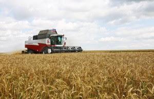 Wegen der Sanktionen: Russland ist jetzt weltgrößter Getreideexporteur