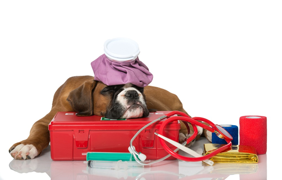 Primeros auxilios a perros