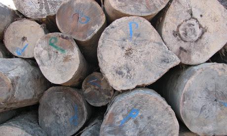illegal timber peru