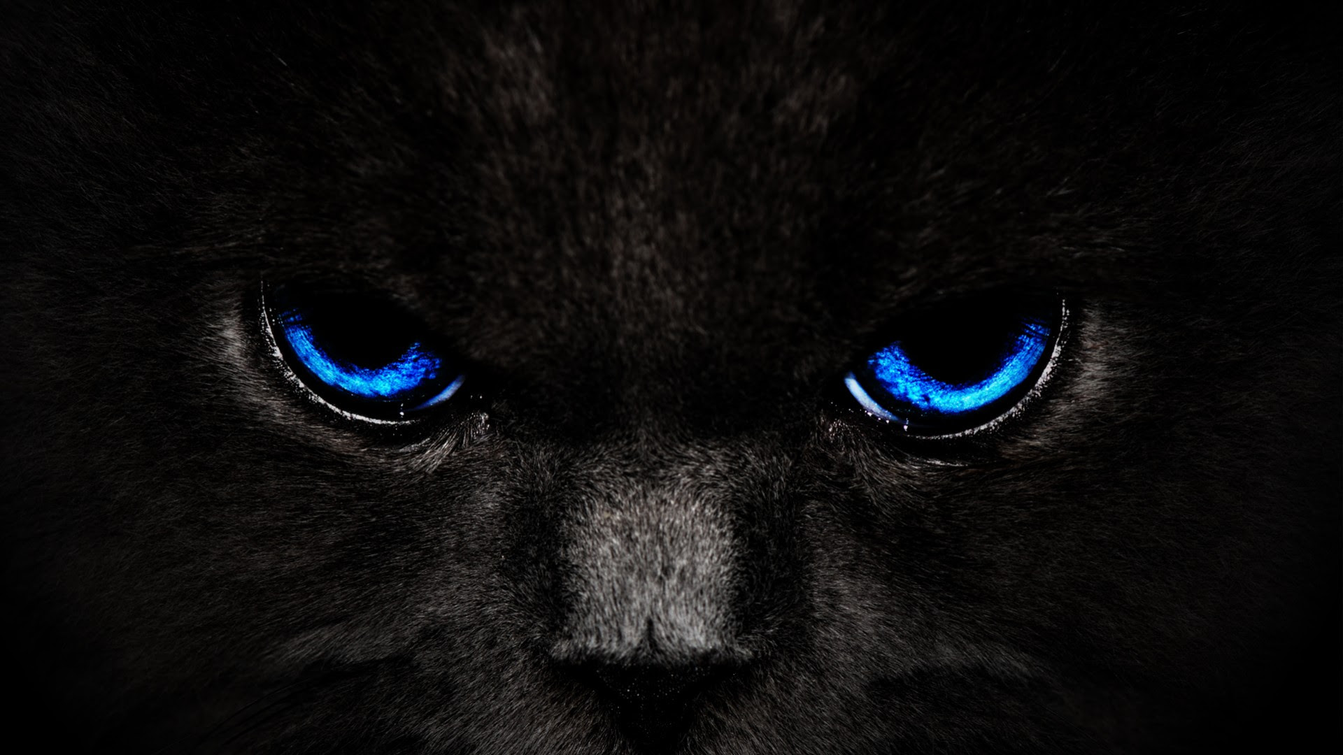Panther Wallpapers   Best Wallpapers