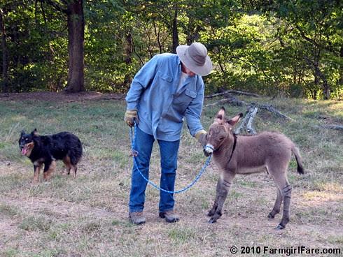 Donkey Training 3