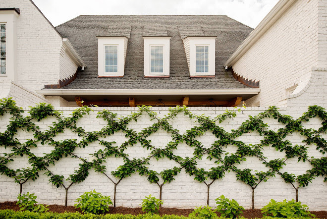 Wall Vines Home Vines Landscaping The wall vines are actually pear trees #Vines #wallvines #landscaping #gardens #plants Allard Ward Architects